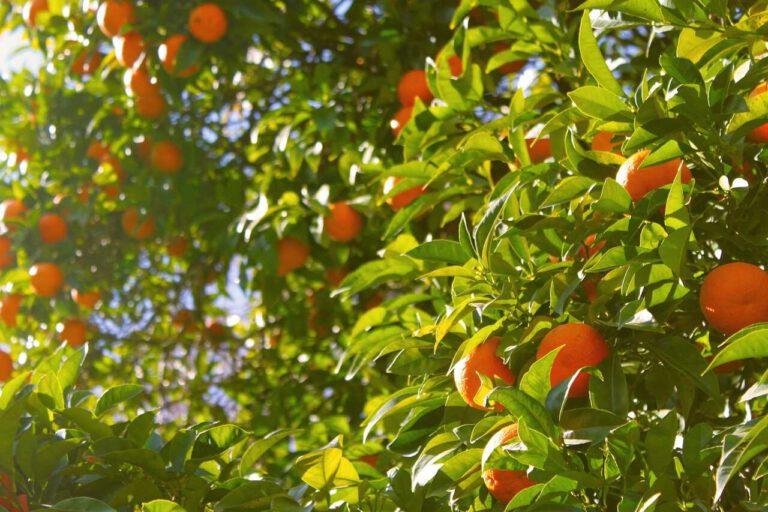 TOP 5 potravin na přírodní zvýšení imunity